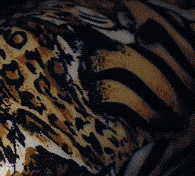 china camouflage tiger: camouflage on right neck