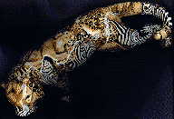 china camouflage tiger: view from top